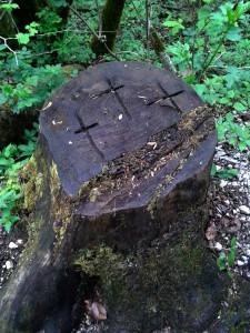 kreuzebaumstumpfkoenigssee