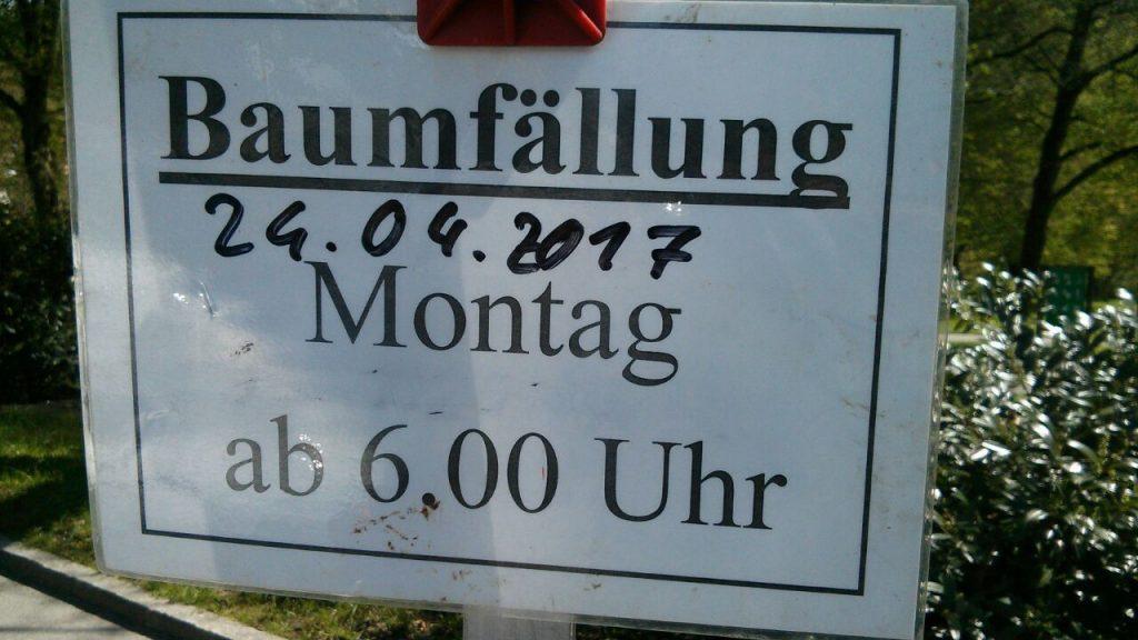 baumfaellung_karlspark1