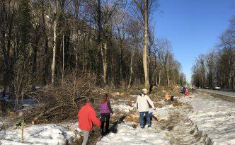 Teilnehmer der Ortsbegehung beim gemeinsamen Zählen der gefällten Bäume im Rodungsgebiet - die Fällung bzw. irreparable Schädigung von mindestens 300 weiteren Bäumen wird erwartet.